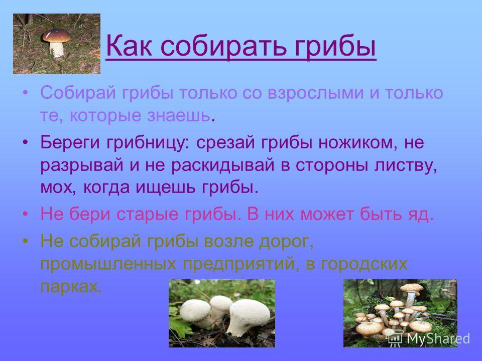Как собирать грибы Собирай грибы только со взрослыми и только те, которые знаешь. Береги грибницу: срезай грибы ножиком, не разрывай и не раскидывай в стороны листву, мох, когда ищешь грибы. Не бери старые грибы. В них может быть яд. Не собирай грибы