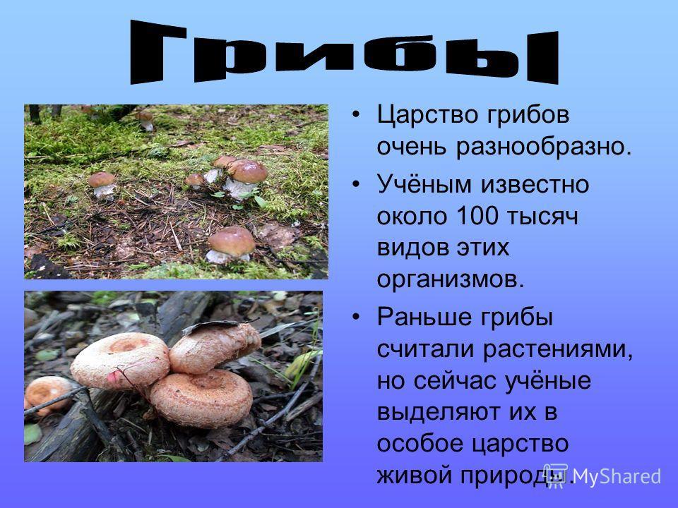 Царство грибов очень разнообразно. Учёным известно около 100 тысяч видов этих организмов. Раньше грибы считали растениями, но сейчас учёные выделяют их в особое царство живой природы.