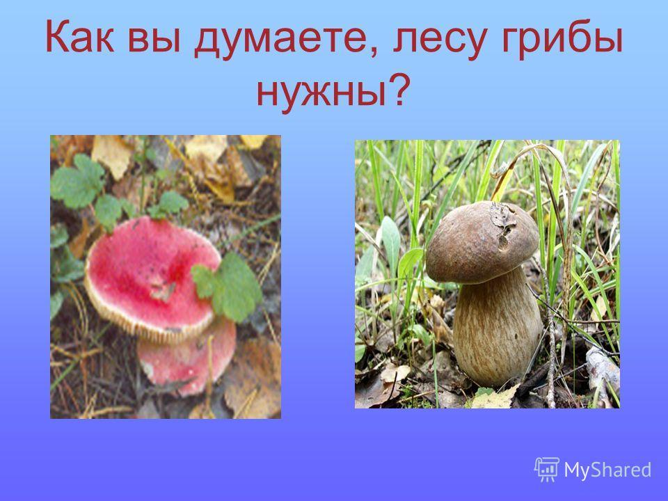 Как вы думаете, лесу грибы нужны?