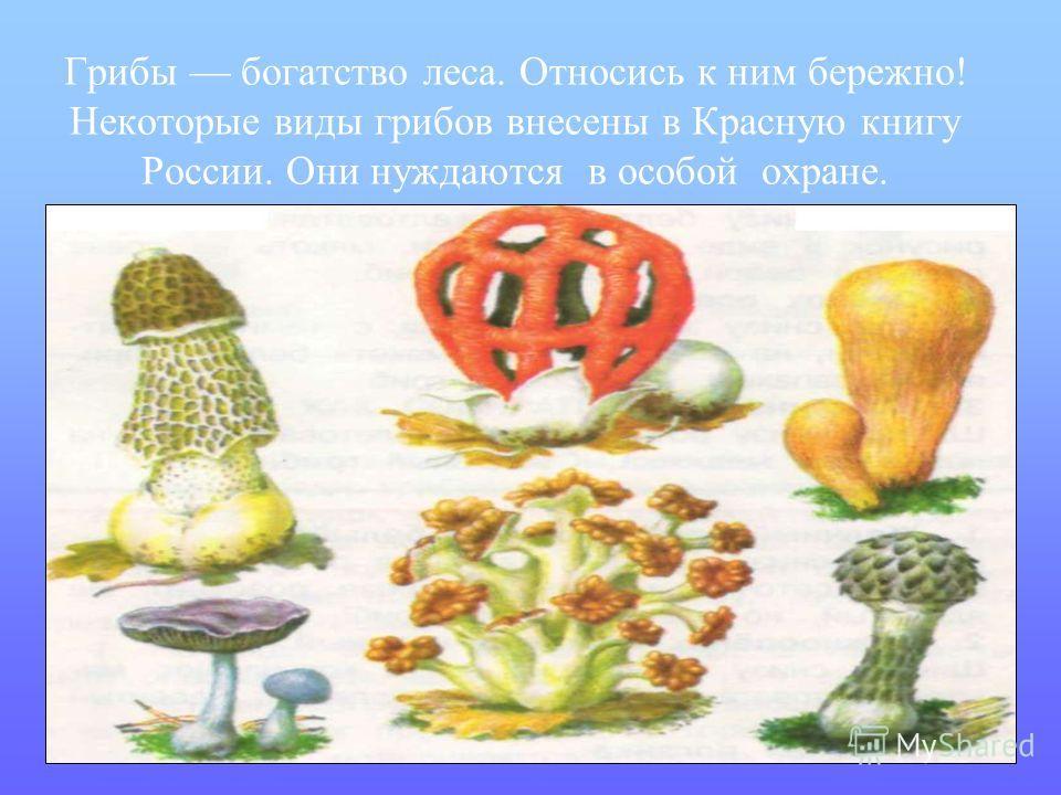 Грибы богатство леса. Относись к ним бережно! Некоторые виды грибов внесены в Красную книгу России. Они нуждаются в особой охране.