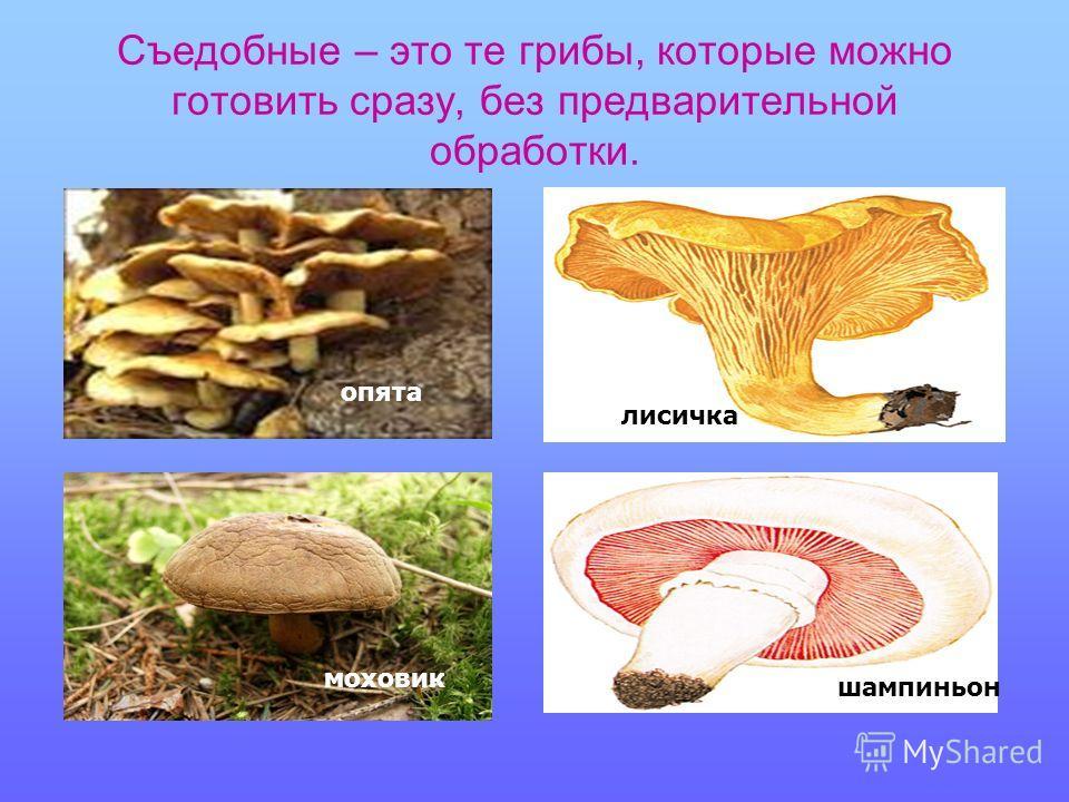 Съедобные – это те грибы, которые можно готовить сразу, без предварительной обработки. опята лисичка моховик шампиньон