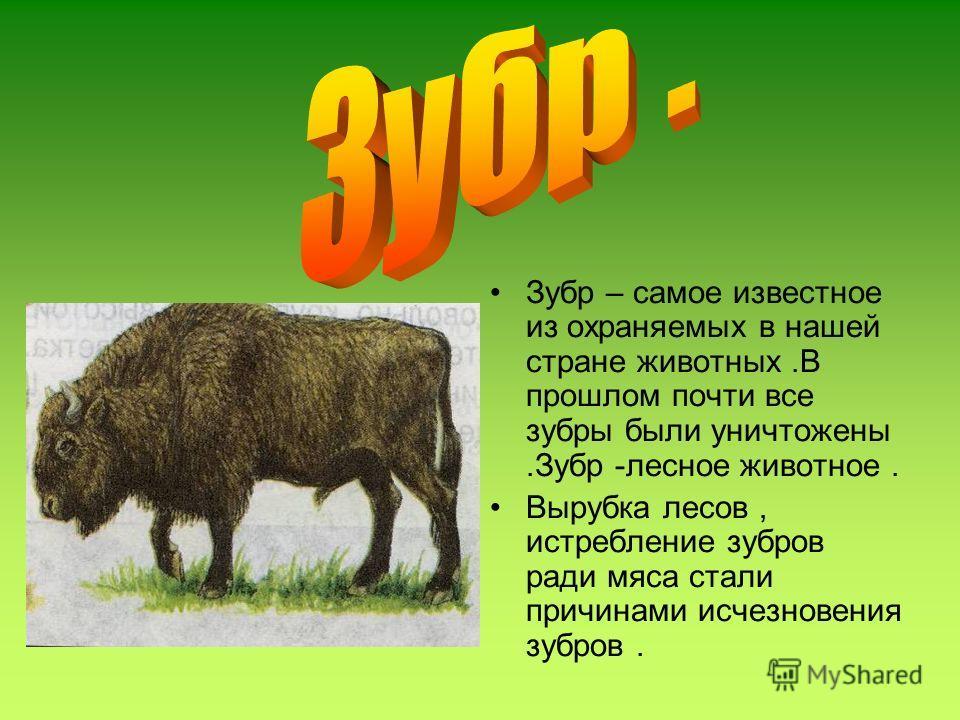 Зубр – самое известное из охраняемых в нашей стране животных.В прошлом почти все зубры были уничтожены.Зубр -лесное животное. Вырубка лесов, истребление зубров ради мяса стали причинами исчезновения зубров.