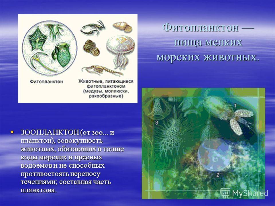 Фитопланктон пища мелких морских животных. ЗООПЛАНКТОН (от зоо... и планктон), совокупность животных, обитающих в толще воды морских и пресных водоемов и не способных противостоять переносу течениями; составная часть планктона. ЗООПЛАНКТОН (от зоо...