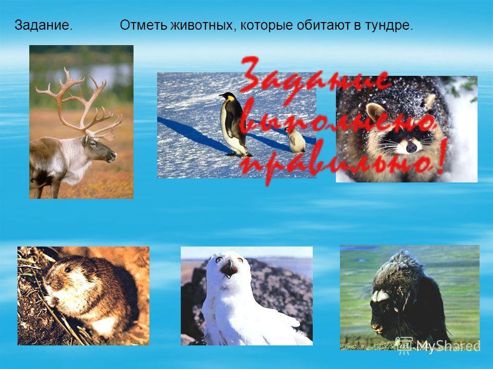 Отметь животных, которые обитают в тундре.Задание. лемминг полярная сова овцебык северный олень