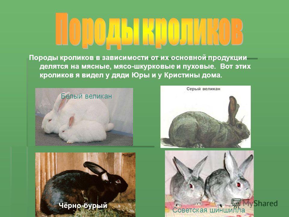 Породы кроликов в зависимости от их основной продукции делятся на мясные, мясо-шкурковые и пуховые. Вот этих кроликов я видел у дяди Юры и у Кристины дома. Белый великан Советская шиншилла Чёрно-бурый