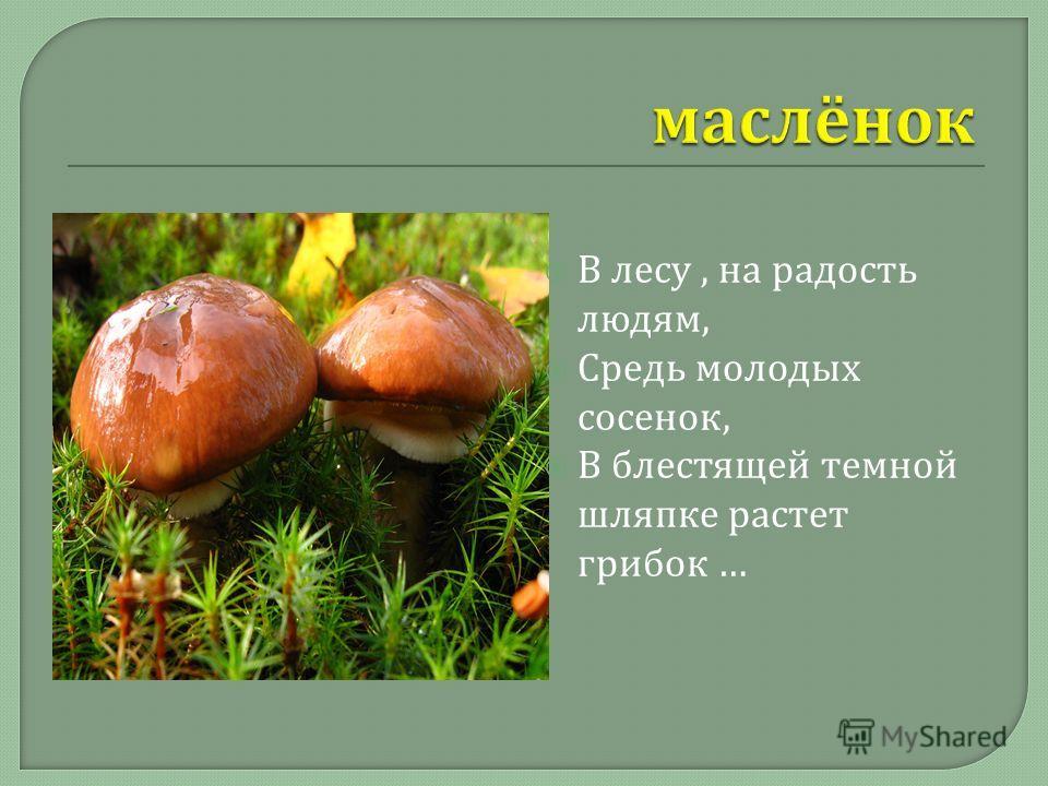 В лесу, на радость людям, Средь молодых сосенок, В блестящей темной шляпке растет грибок …