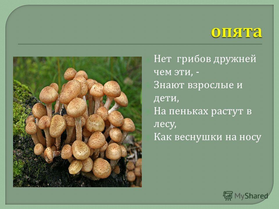Нет грибов дружней чем эти, - Знают взрослые и дети, На пеньках растут в лесу, Как веснушки на носу