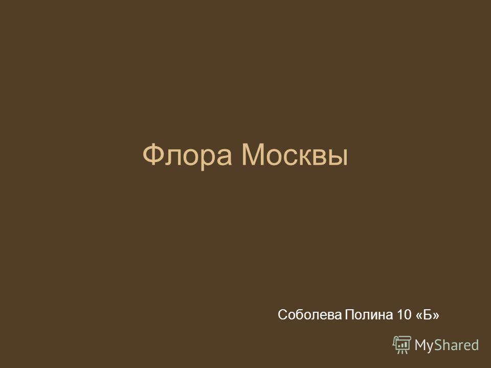 Флора Москвы Соболева Полина 10 «Б»