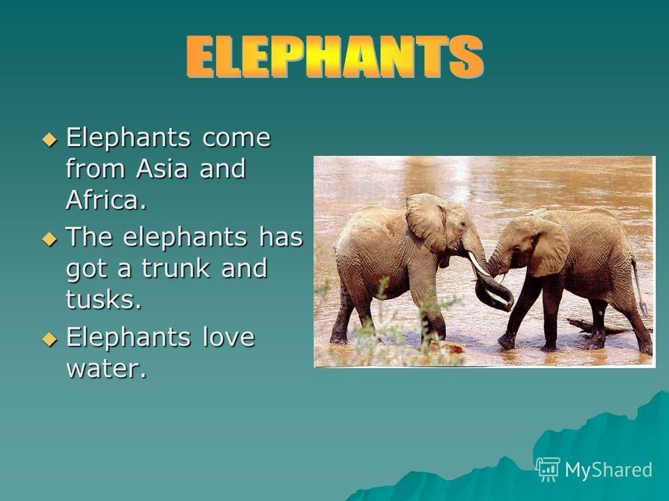 Elephants come from Asia and Africa. Elephants come from Asia and Africa. The elephants has got a trunk and tusks. The elephants has got a trunk and tusks. Elephants love water. Elephants love water.