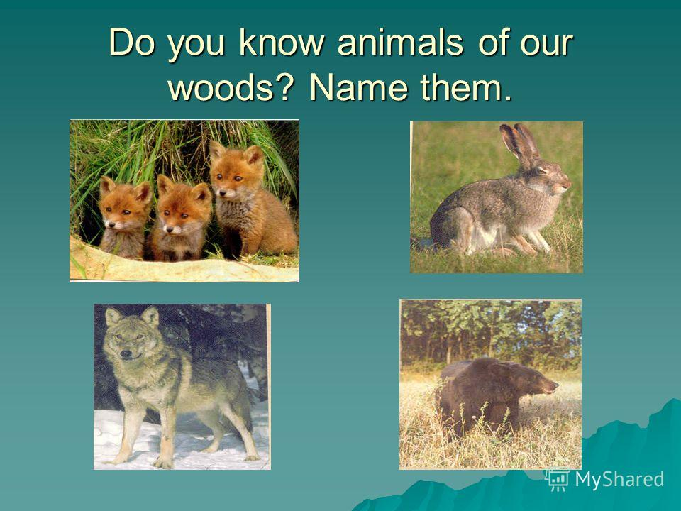Do you know animals of our woods? Name them.