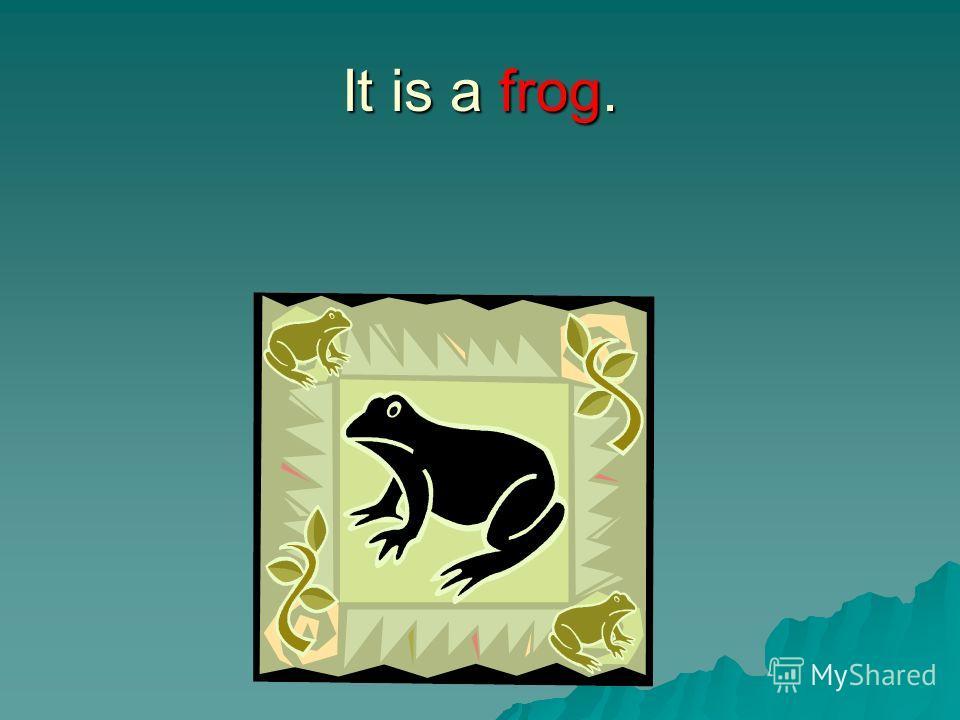 It is a frog.