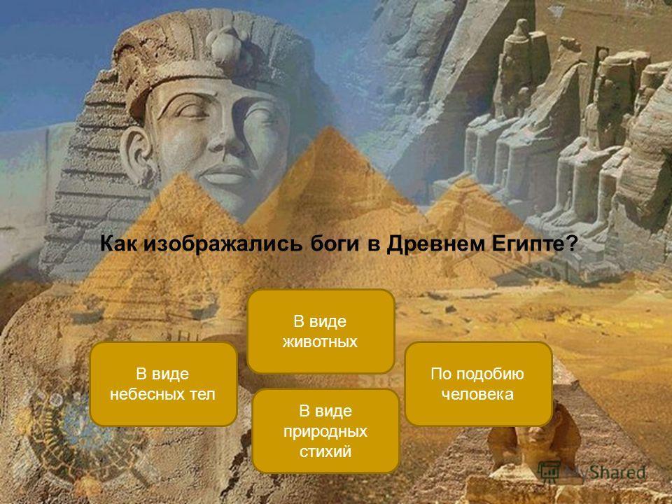 Как изображались боги в Древнем Египте? В виде животных В виде небесных тел По подобию человека В виде природных стихий