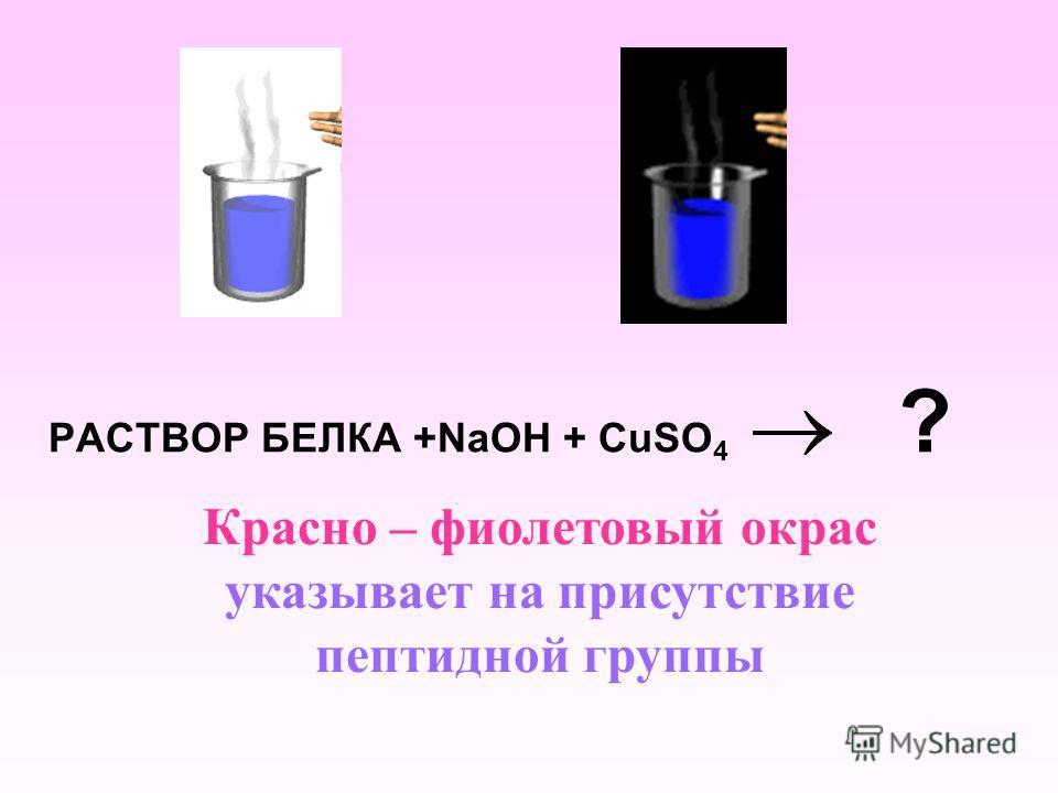 РАСТВОР БЕЛКА +NaOH + CuSO 4 ? Красно – фиолетовый окрас указывает на присутствие пептидной группы