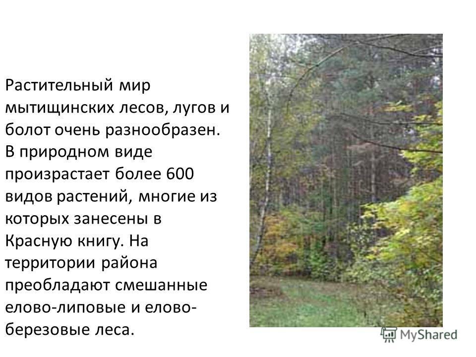 Растительный мир мытищинских лесов, лугов и болот очень разнообразен. В природном виде произрастает более 600 видов растений, многие из которых занесены в Красную книгу. На территории района преобладают смешанные елово-липовые и елово- березовые леса