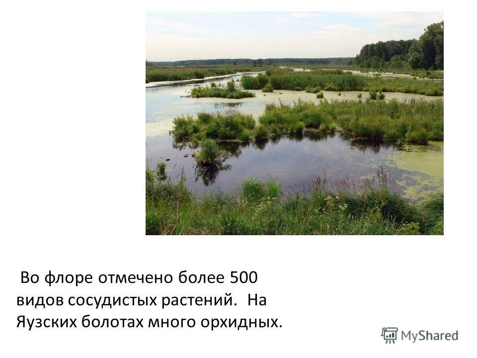 Во флоре отмечено более 500 видов сосудистых растений. На Яузских болотах много орхидных.
