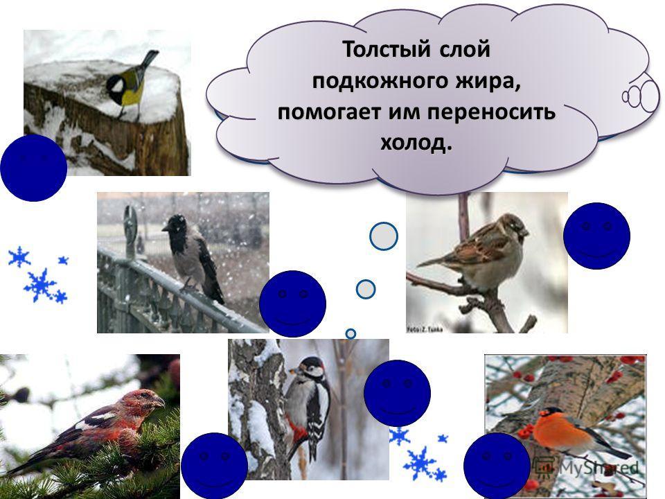 Тема урока «Где зимуют разные птицы ?»