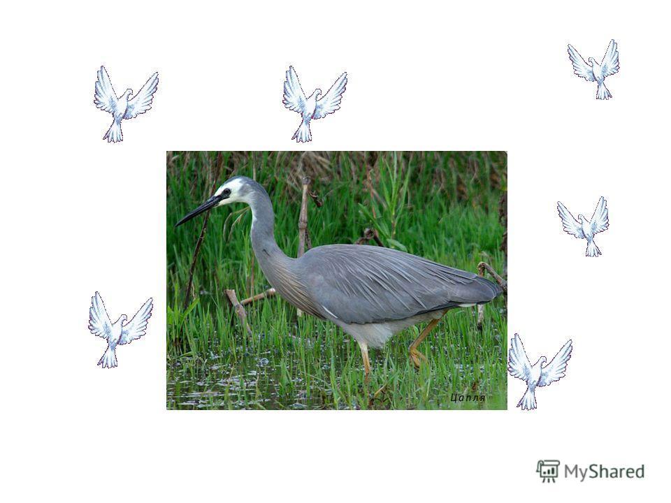 Птицы, которые могут и зимой найти себе корм, называются зимующими. Птицы, которые могут и зимой найти себе корм, называются зимующими. Толстый слой подкожного жира, помогает им переносить холод.