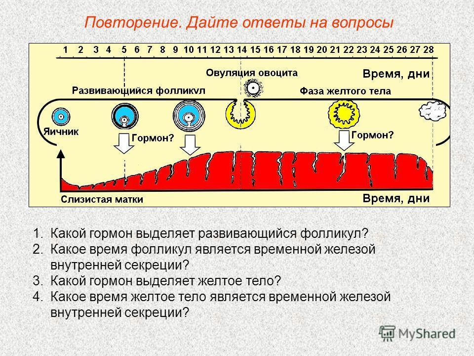 Повторение. Дайте ответы на вопросы 1.Какой гормон выделяет развивающийся фолликул? 2.Какое время фолликул является временной железой внутренней секреции? 3.Какой гормон выделяет желтое тело? 4.Какое время желтое тело является временной железой внутр