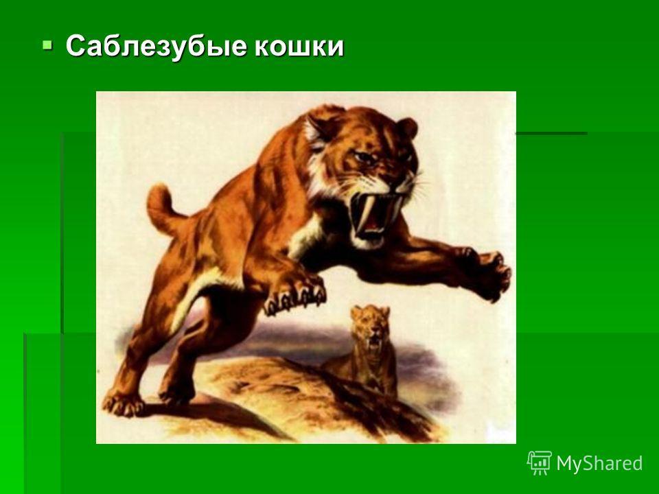 Саблезубые кошки Саблезубые кошки