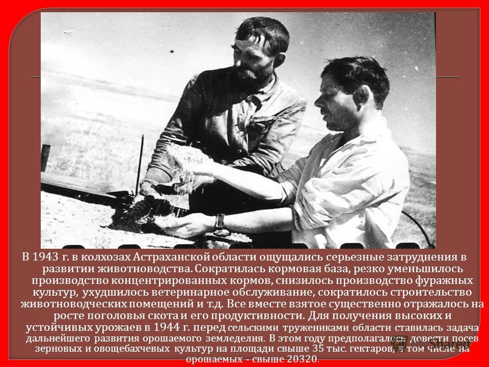В 1943 г. в колхозах Астраханской области ощущались серьезные затруднения в развитии животноводства. Сократилась кормовая база, резко уменьшилось производство концентрированных кормов, снизилось производство фуражных культур, ухудшилось ветеринарное