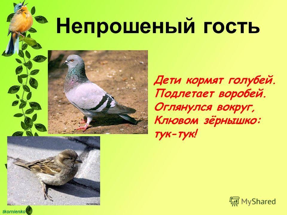 Дети кормят голубей. Подлетает воробей. Оглянулся вокруг, Клювом зёрнышко: тук-тук! Непрошеный гость
