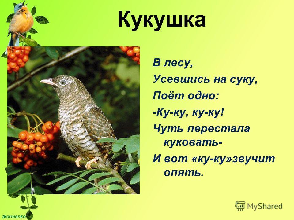 Кукушка В лесу, Усевшись на суку, Поёт одно: -Ку-ку, ку-ку! Чуть перестала куковать- И вот «ку-ку»звучит опять.
