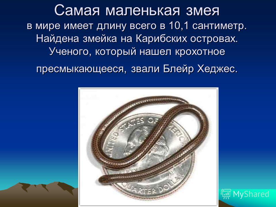 Самая маленькая змея в мире имеет длину всего в 10,1 сантиметр. Найдена змейка на Карибских островах. Ученого, который нашел крохотное пресмыкающееся, звали Блейр Хеджес.