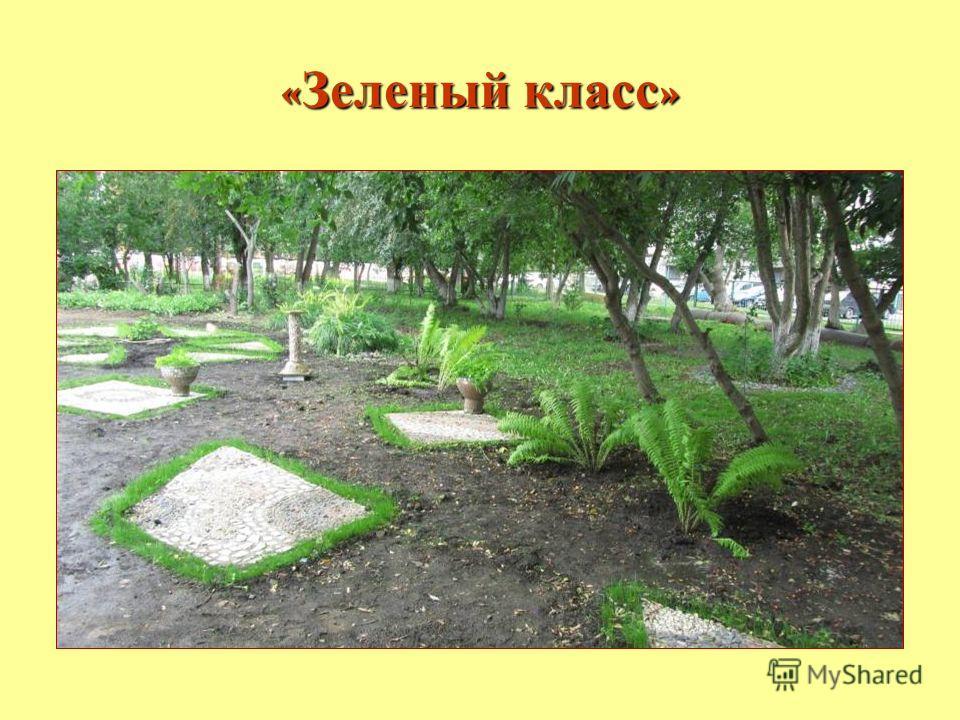 МОУ СОШ 6 « Зеленый класс »