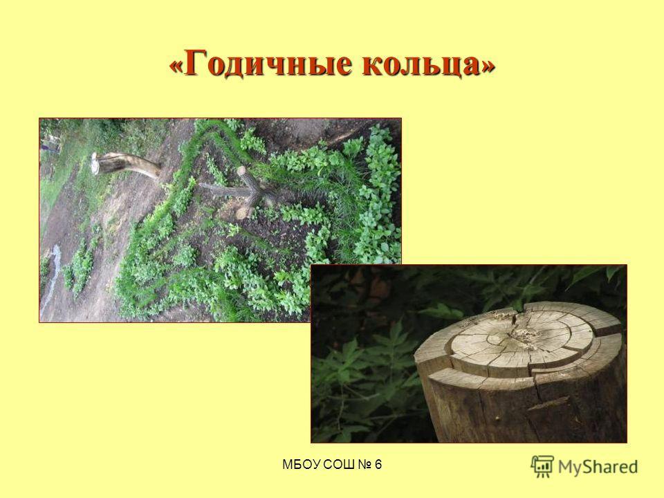 МБОУ СОШ 6 « Годичные кольца »
