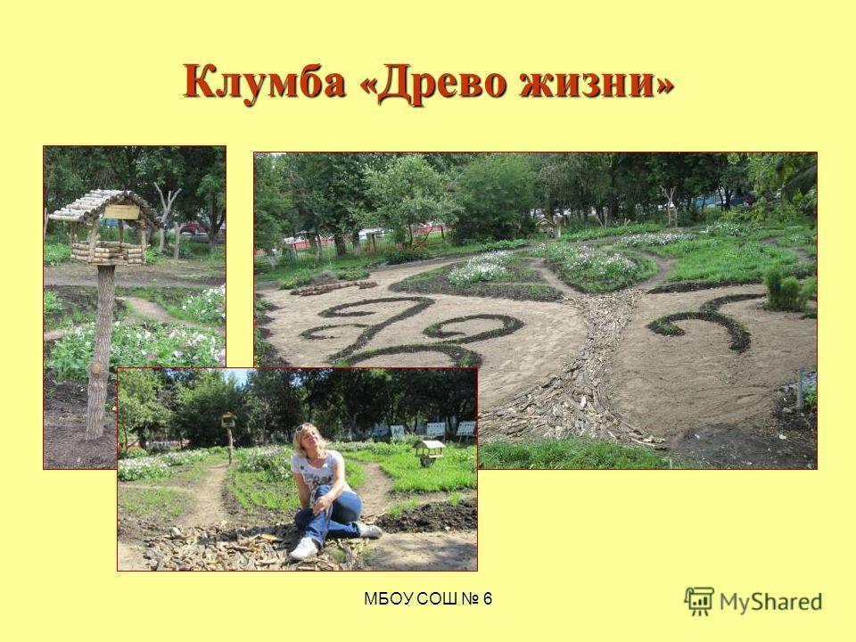 МБОУ СОШ 6 Клумба « Древо жизни »