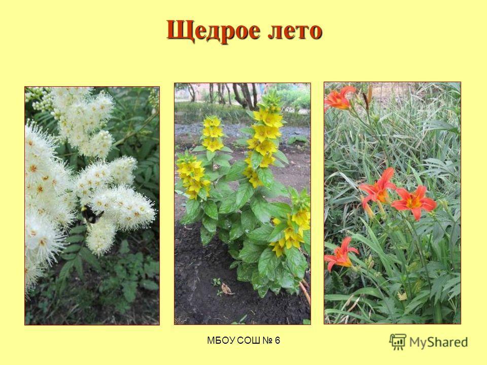 МБОУ СОШ 6 Щедрое лето