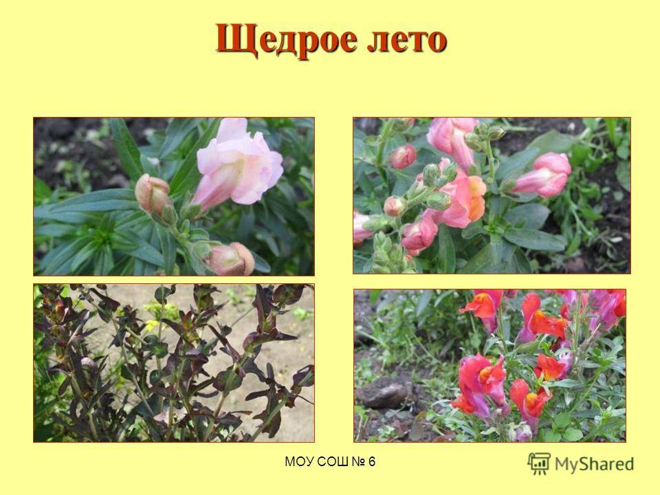 Щедрое лето МОУ СОШ 6