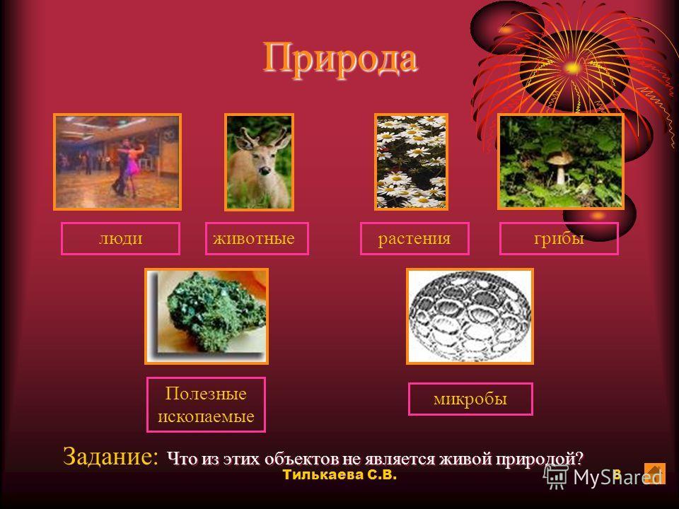 Тилькаева С.В.7 Животные Задание: Все ли эти животные хищники? рысьволклиса орел ястребсова да нет