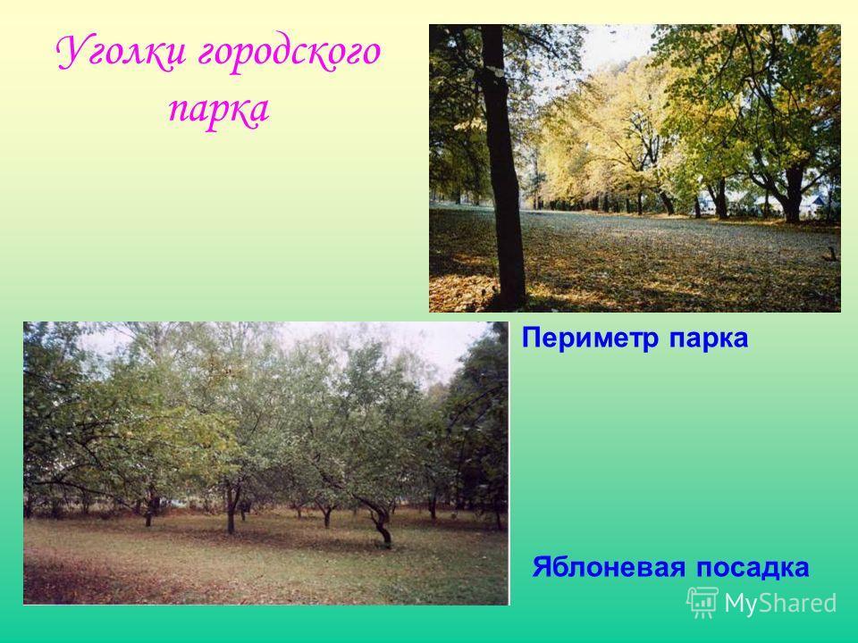 Уголки городского парка Периметр парка Яблоневая посадка