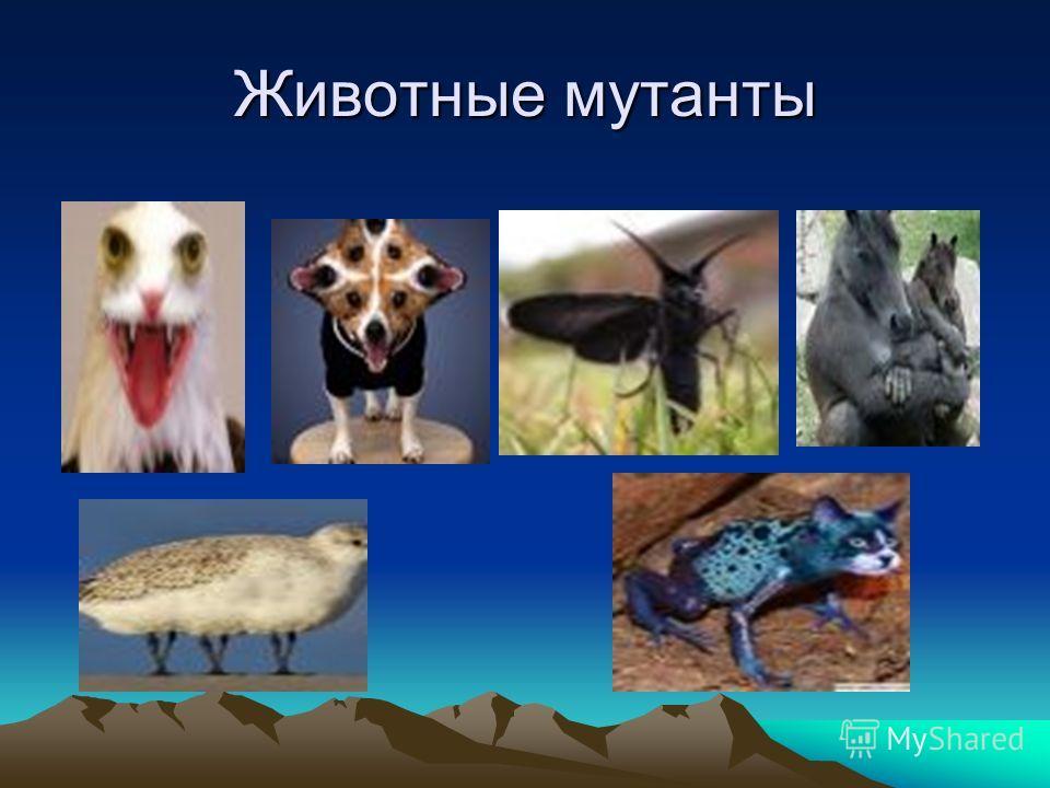Животные мутанты
