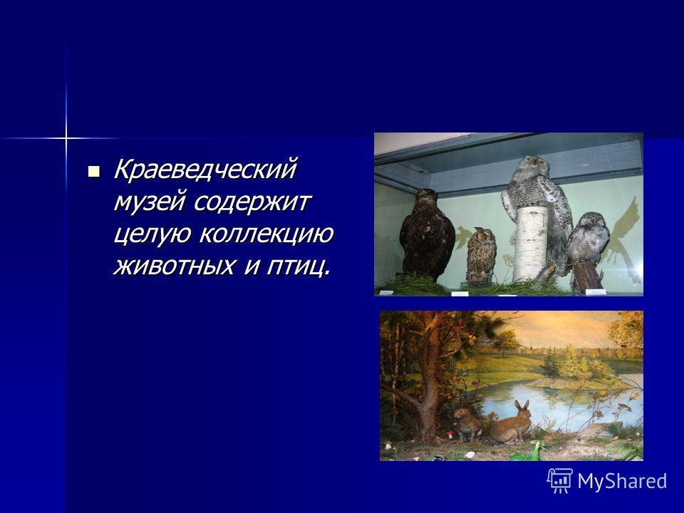Краеведческий музей содержит целую коллекцию животных и птиц. Краеведческий музей содержит целую коллекцию животных и птиц.