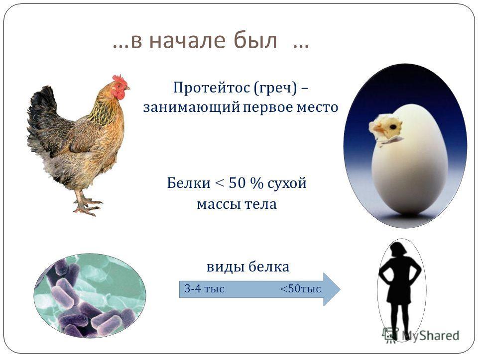 … в начале было … белок Белки < 50 % сухой массы тела виды белка 3-4 тыс