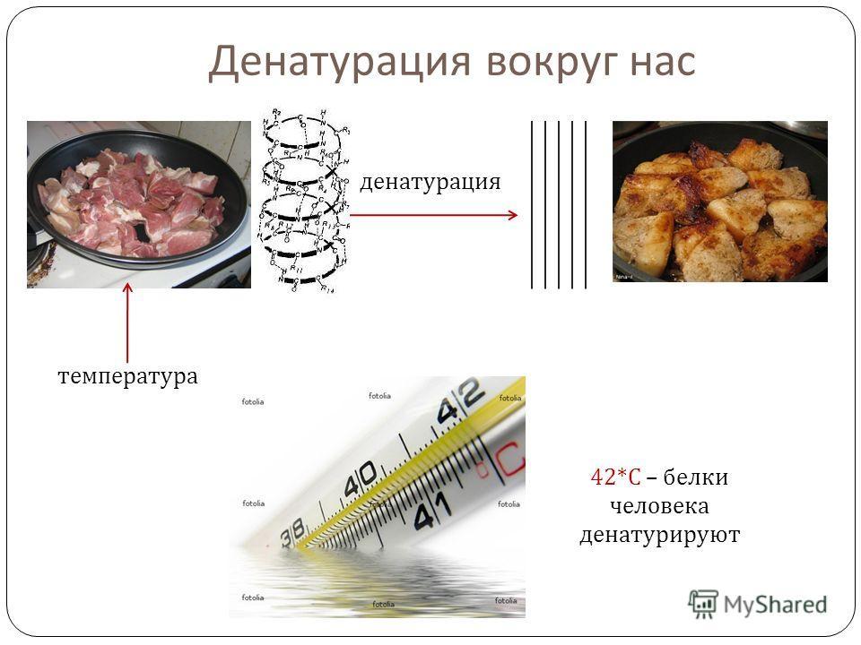 Денатурация вокруг нас температура денатурация 42* С – белки человека денатурируют