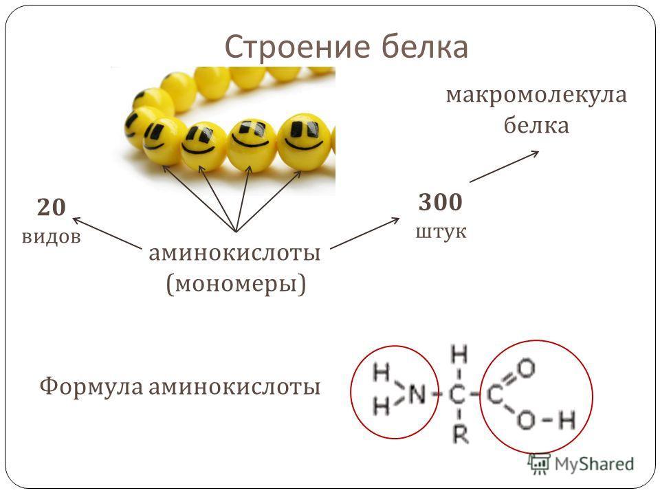 Строение белка аминокислоты ( мономеры ) макромолекула белка 20 видов 300 штук Формула аминокислоты