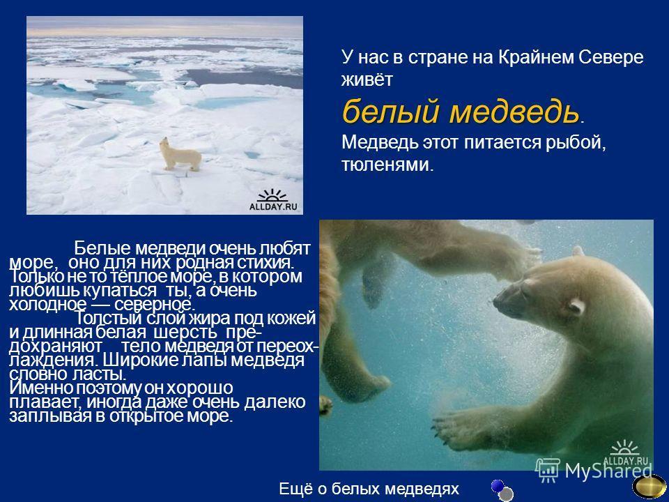 У нас в стране на Крайнем Севере живёт белый медведь белый медведь. Медведь этот питается рыбой, тюленями. Белые медведи очень любят море, оно для них родная стихия. Только не то тёплое море, в котором любишь купаться ты, а очень холодное северное.
