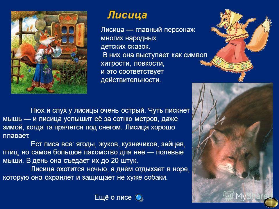 Лисица Лисица главный персонаж многих народных детских сказок. В них она выступает как символ хитрости, ловкости, и это соответствует действительности. Нюх и слух у лисицы очень острый. Чуть пискнет мышь и лисица услышит её за сотню метров, даже зимо
