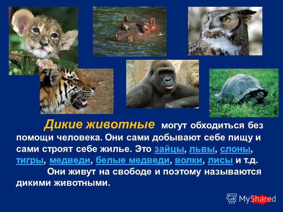 Дикие животные могут обходиться без помощи человека. Они сами добывают себе пищу и сами строят себе жилье. Это зайцы, львы, слоны, тигры, медведи, белые медведи, волки, лисы и т.д.зайцыльвыслоны тигрымедведибелые медведиволкилисы Они живут на свободе