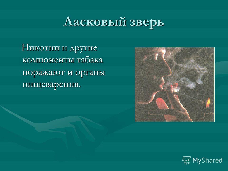 Ласковый зверь Никотин и другие компоненты табака поражают и органы пищеварения. Никотин и другие компоненты табака поражают и органы пищеварения.