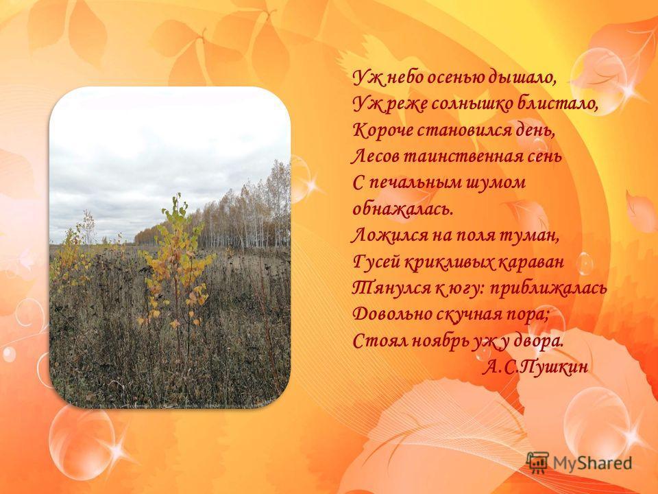 FokinaLida.75@mail.ru Уж небо осенью дышало, Уж реже солнышко блистало, Короче становился день, Лесов таинственная сень С печальным шумом обнажалась. Ложился на поля туман, Гусей крикливых караван Тянулся к югу: приближалась Довольно скучная пора; Ст