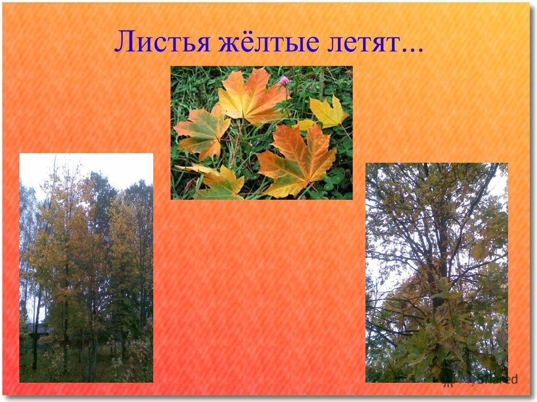 Листья жёлтые летят...