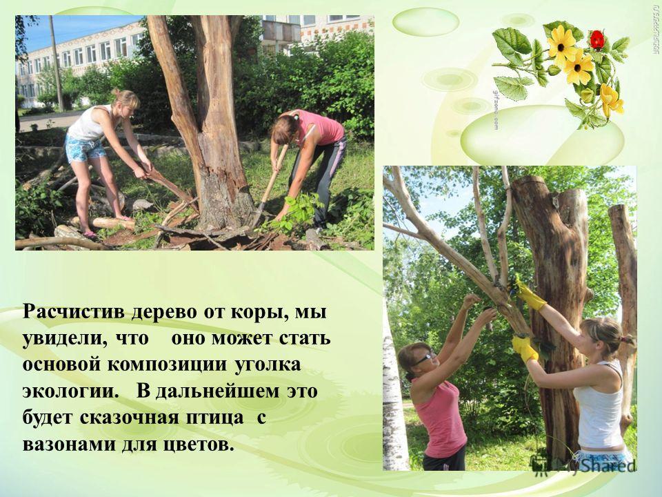 Расчистив дерево от коры, мы увидели, что оно может стать основой композиции уголка экологии. В дальнейшем это будет сказочная птица с вазонами для цветов.