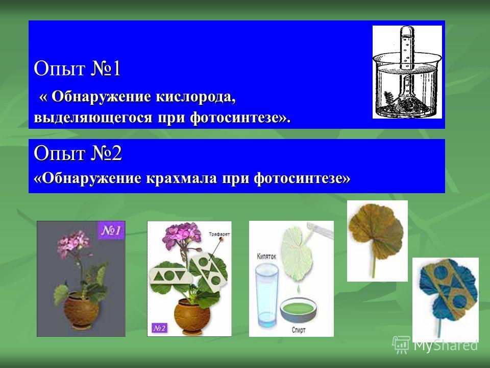 1 « Обнаружение кислорода, выделяющегося при фотосинтезе». Опыт 1 « Обнаружение кислорода, выделяющегося при фотосинтезе». Опыт 2 «Обнаружение крахмала при фотосинтезе»