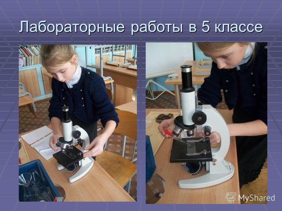 Лабораторные работы в 5 классе