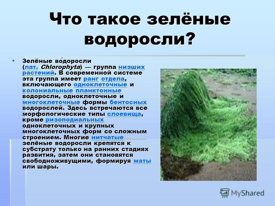 Что такое зелёные водоросли? Зелёные водоросли (лат. Chlorophyta) группа низших растений. В современной системе эта группа имеет ранг отдела, включающего одноклеточные и колониальные планктонные водоросли, одноклеточные и многоклеточные формы бентосн
