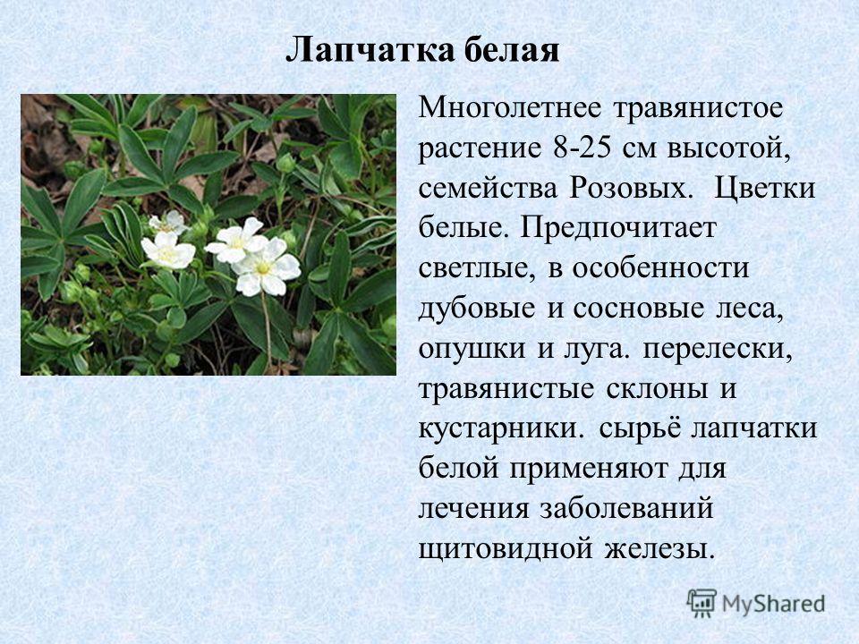 Лапчатка белая Многолетнее травянистое растение 8-25 см высотой, семейства Розовых. Цветки белые. Предпочитает светлые, в особенности дубовые и сосновые леса, опушки и луга. перелески, травянистые склоны и кустарники. сырьё лапчатки белой применяют д